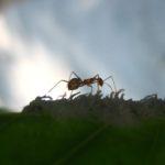 La hormiga sin nombre