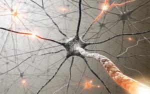reparar la mielina