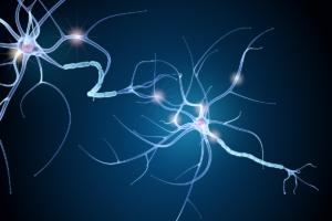 celulas productoras de mielina