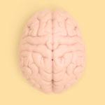 """Ese tesoro llamado """"Cerebro""""… que a veces ignoramos"""